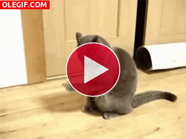 GIF: A este gato se le ha posado una mariposa