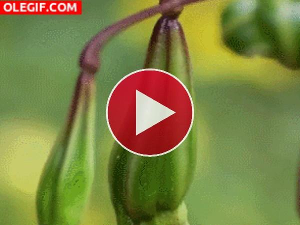 Soltando semillas