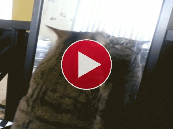 GIF: A este gato no le gusta su cara