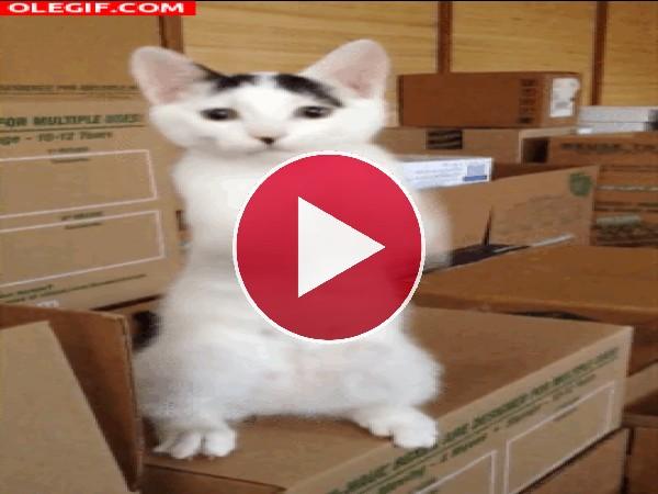 GIF: Olé que bien toca las palmas este gato