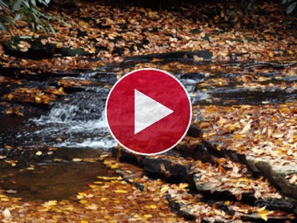Arroyo corriendo en otoño
