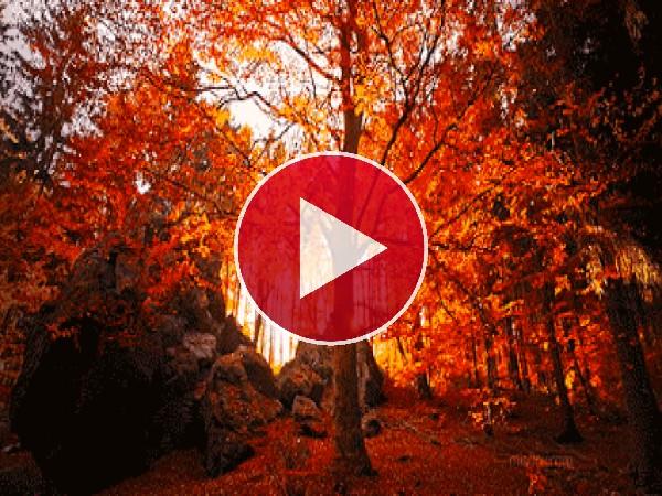 GIF: Sol brillando en otoño