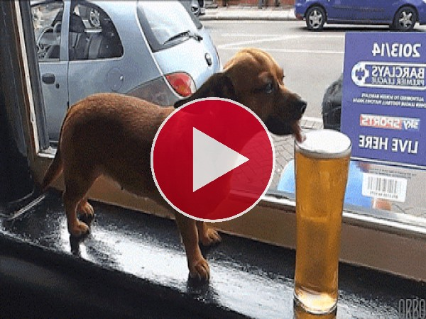 GIF: A este perro le gusta la cerveza
