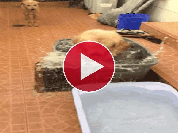 GIF: Este perro es muy limpio