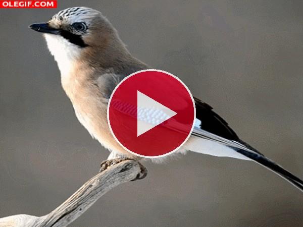 Pájaro moviéndose sobre una rama