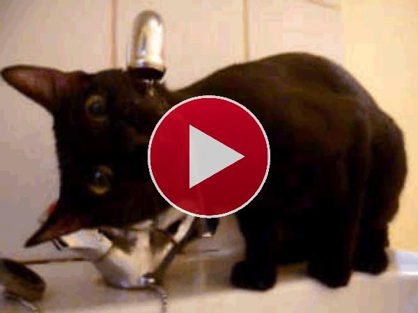 Un gatito con mucha sed