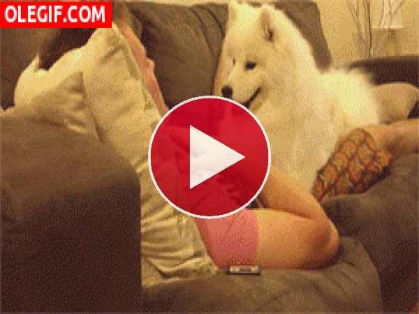 GIF: Un perro muy cariñoso