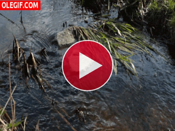 GIF: Agua moviéndose con el viento