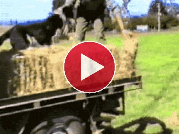 Un perro granjero