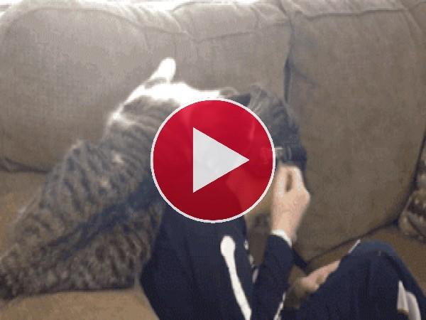 GIF: Este gato es muy mimoso