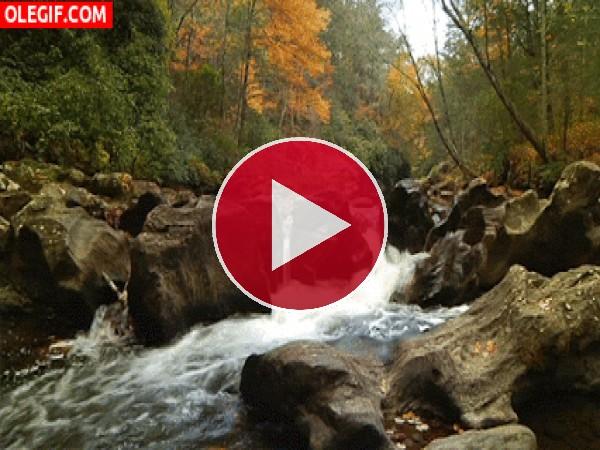 Río corriendo en otoño