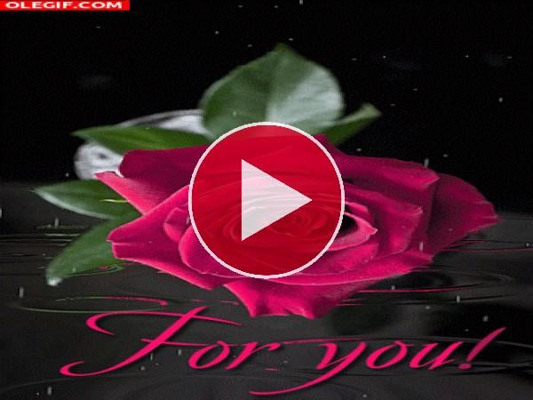 GIF: ¡Esta rosa es para ti!