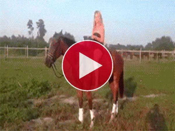 """GIF: Esto es lo que pasa cuando haces el """"reto del agua fría"""" sobre un caballo"""