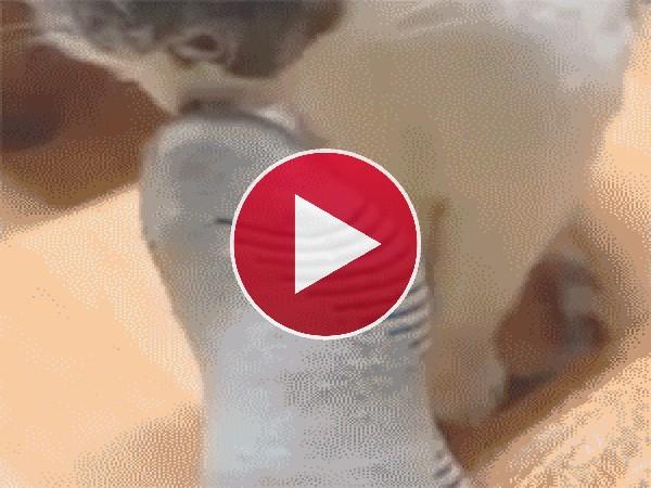 GIF: La cara de tu gato cuando te huelen los pies