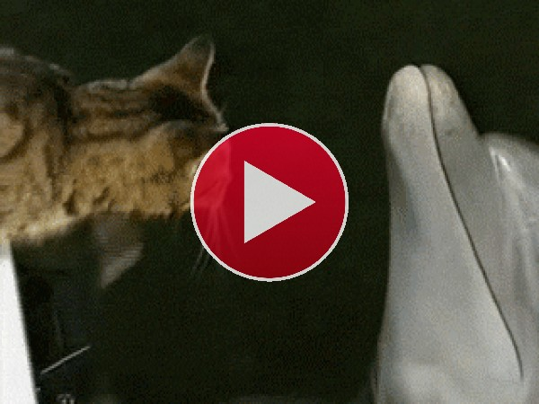 Gato besando a un delfin