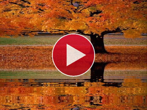 GIF: Árbol otoñal reflejado en el agua