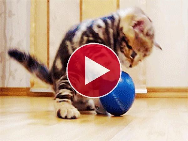 Mira a este gatito jugando con una pelota