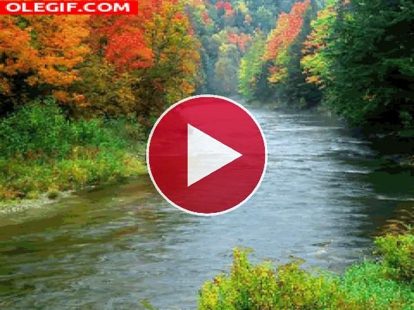 GIF: Árboles otoñales a orillas del río