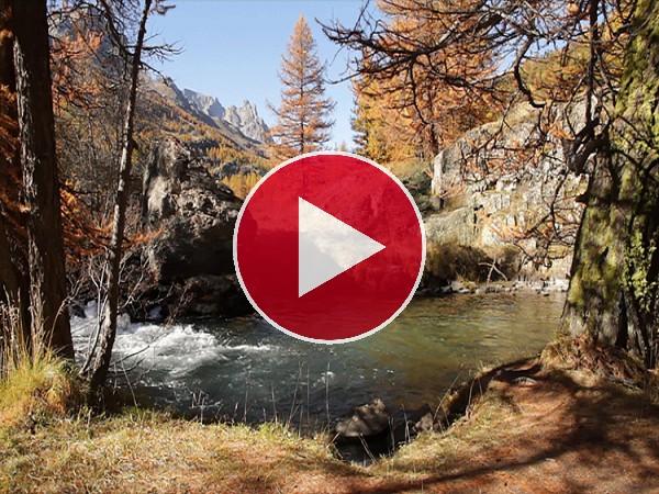 Río fluyendo en otoño