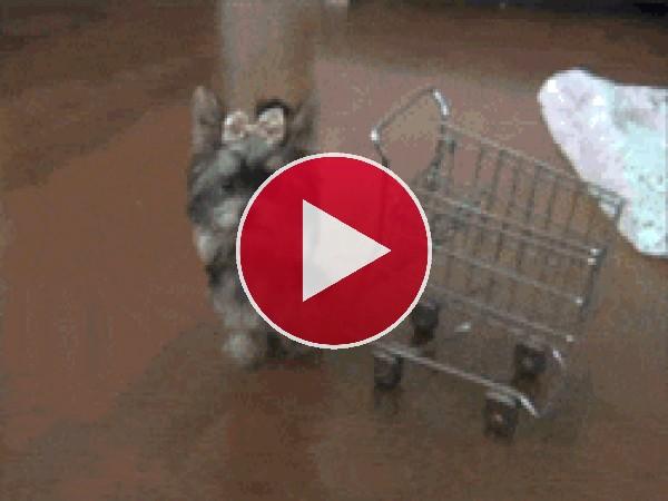 GIF: Esta perrita se va a la compra