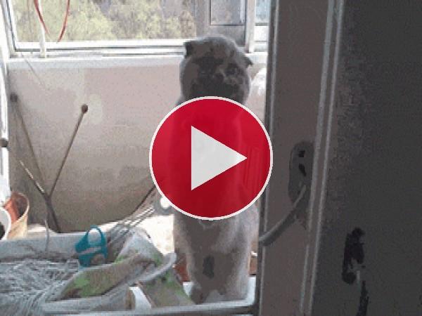 GIF: Este gato quiere entrar en casa