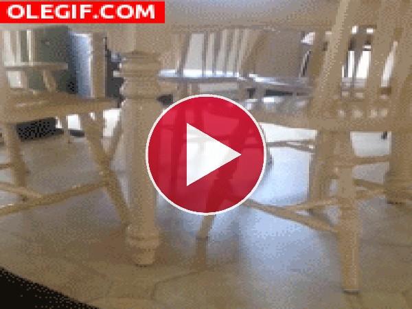 ¿A que juega este perro?