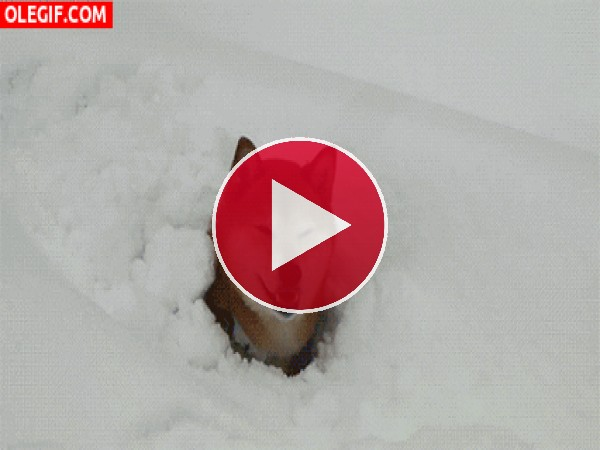 Este perro encuentra la pelota entre la nieve