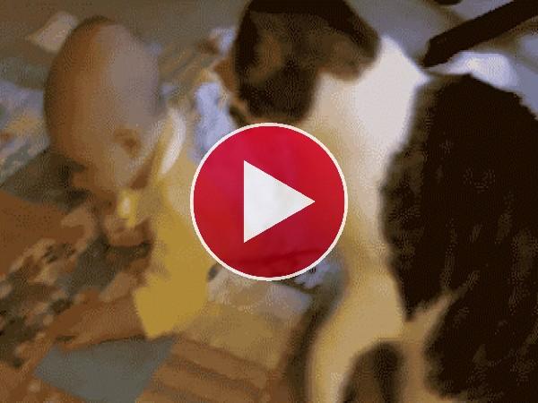 A este gato le gusta el bebé