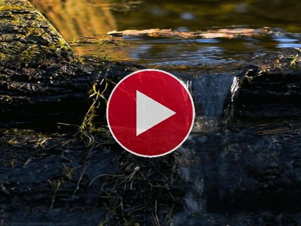 GIF: Agua en la naturaleza