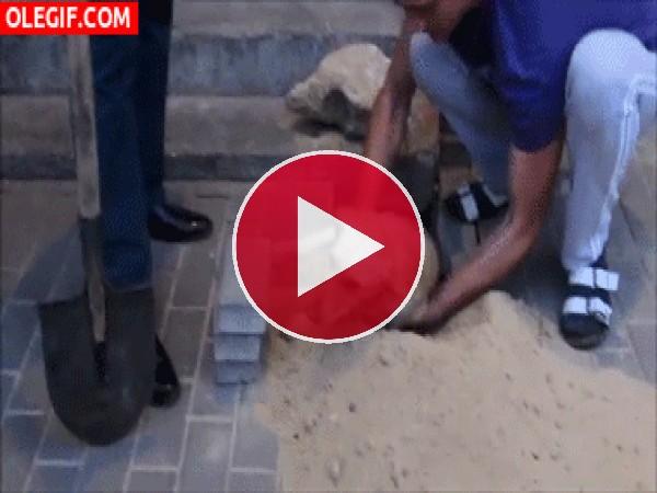 Salvando a un perro