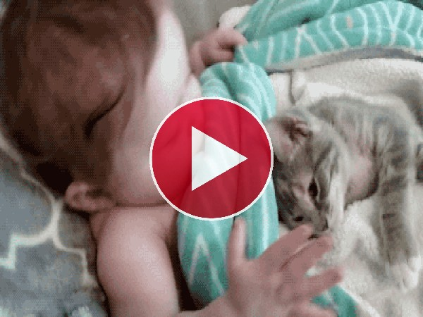 Mira a este gato tumbado junto al bebé