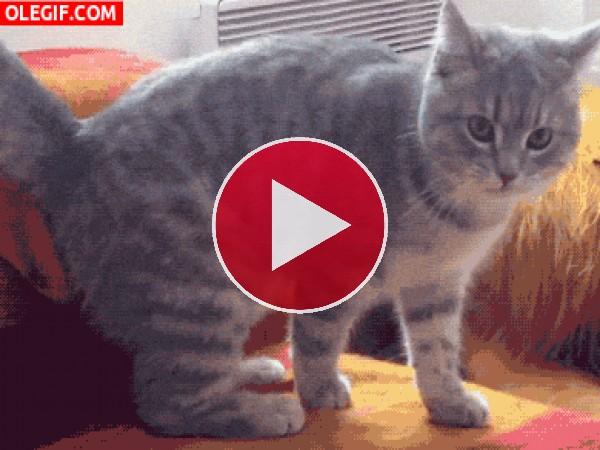 GIF: Este gato se pelea con su pata