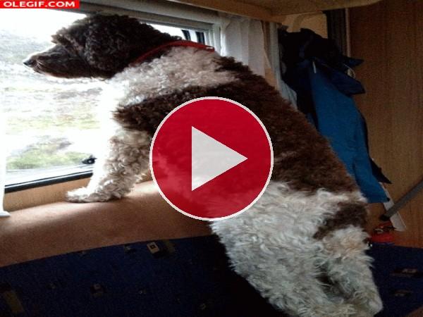 GIF: Un perro mirando por la ventanilla