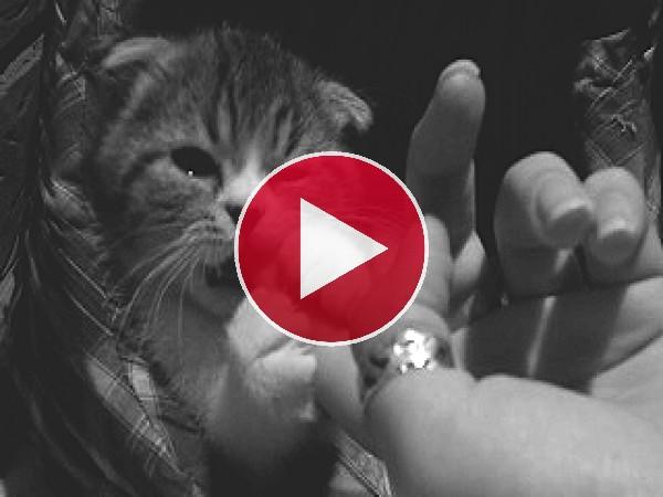 GIF: Mordisquitos en el dedo