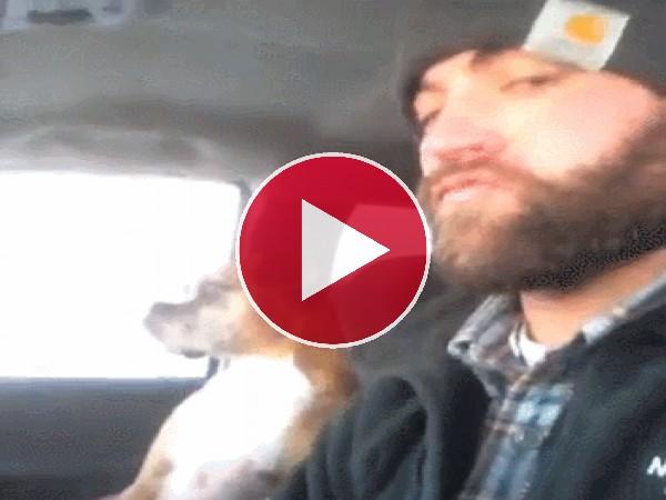 GIF: Con mi perro de copiloto