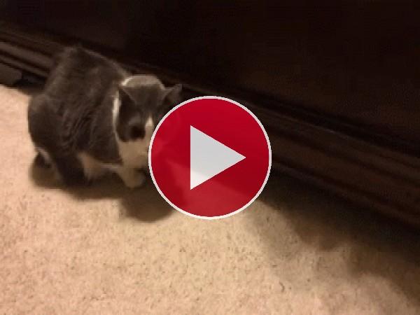 Un gato asomando la patita