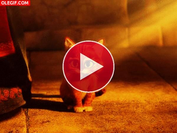 GIF: El gato con Botas