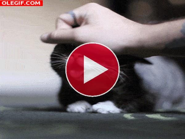 A este gato le gusta que le acaricien