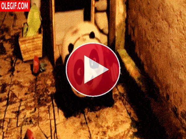 El pequeño Kung Fu Panda rodando
