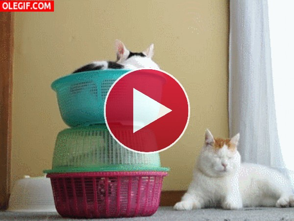 GIF: A este gato le tenían encerrado