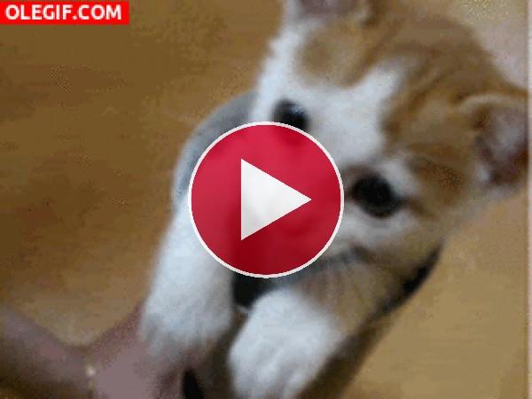 GIF: Este gatito es muy juguetón