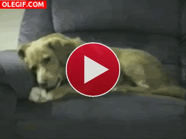GIF: Este perro se pelea con su pata