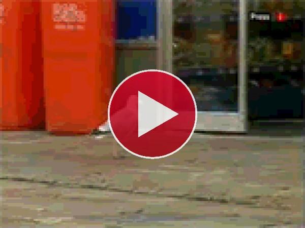 Mira a esta gaviota robando una bolsa de doritos