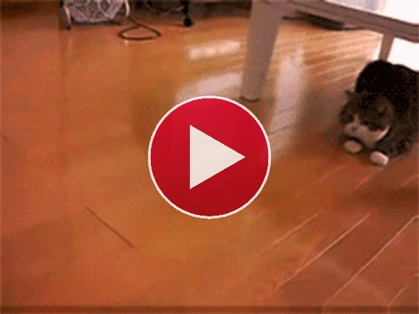 Mira a este gato jugando con una caja