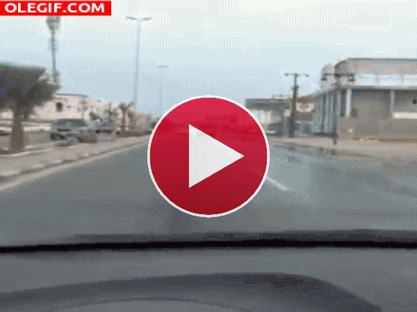 GIF: Un lagarto de copiloto