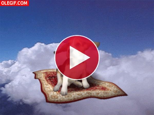GIF: Perro volando en la alfombra mágica