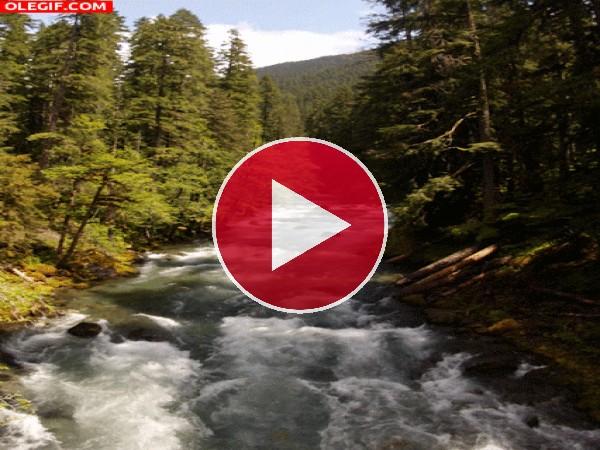 Agua del río fluyendo entre árboles
