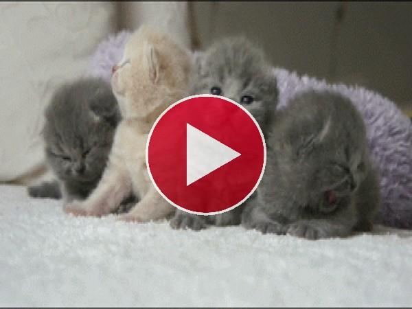 Mira a estos cuatros gatitos