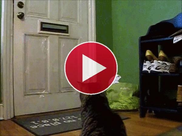 Mira a este gato recogiendo el correo