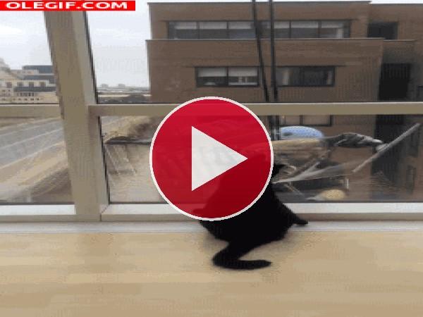 Este gato alucina con el limpia cristales